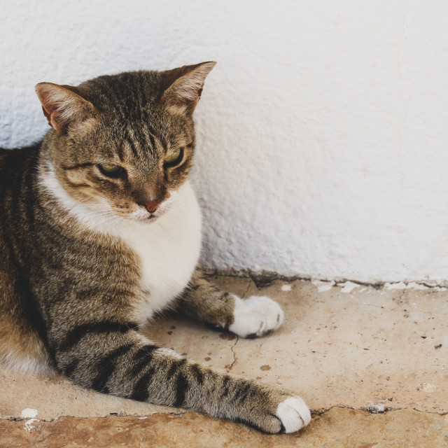 """Lazy Lanzarote Cat"" stock image"
