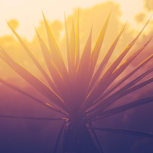 """Sunset Beach Palm Tree"" stock image"