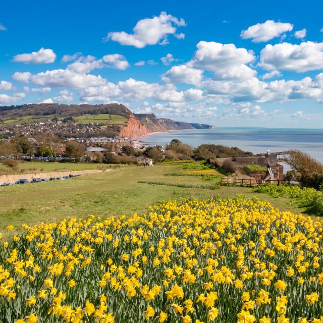 """Sidmouth, Dorset, England"" stock image"