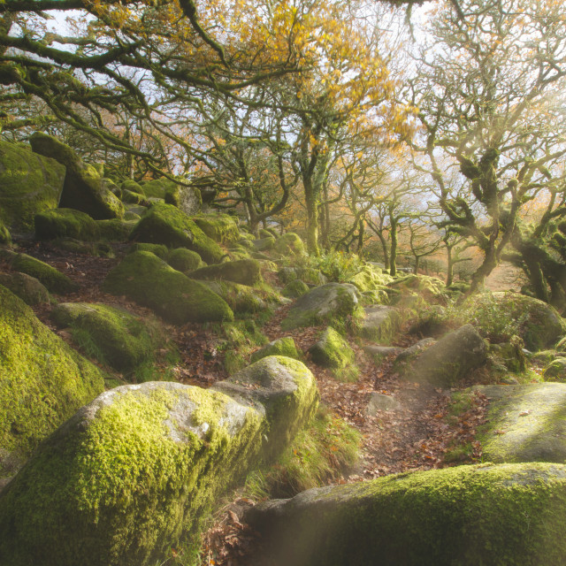 """""""The Magical Wistmans Wood"""" stock image"""