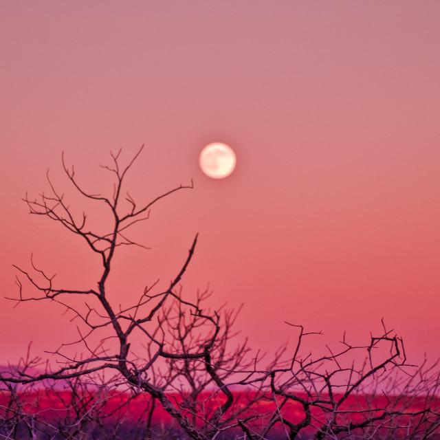 """Full Moon Twilight"" stock image"
