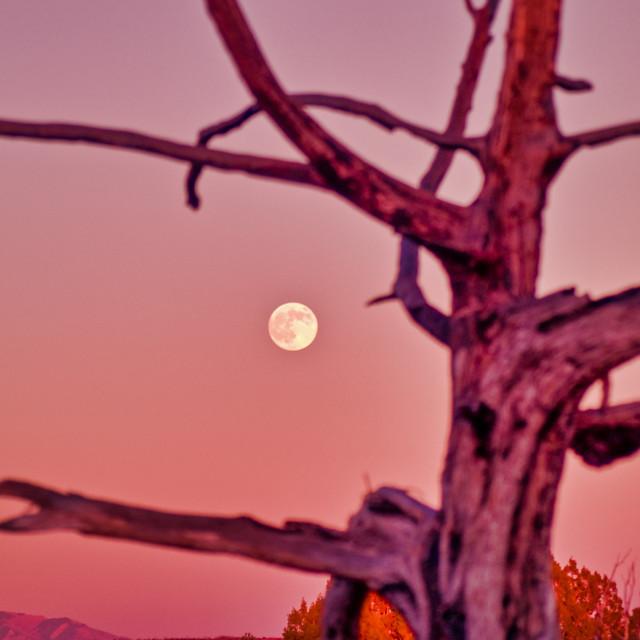"""Barren Tree and Full Moon"" stock image"