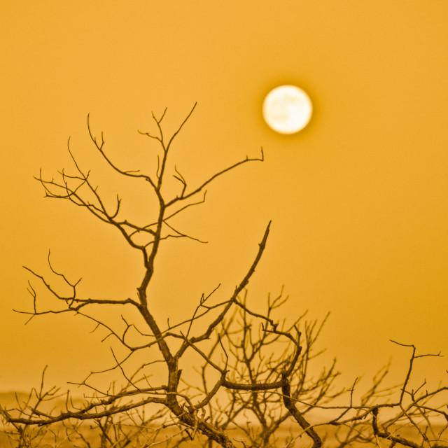 """Full Moon at Sunset"" stock image"