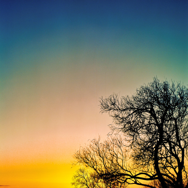 """Barren Tree at Sunrise"" stock image"