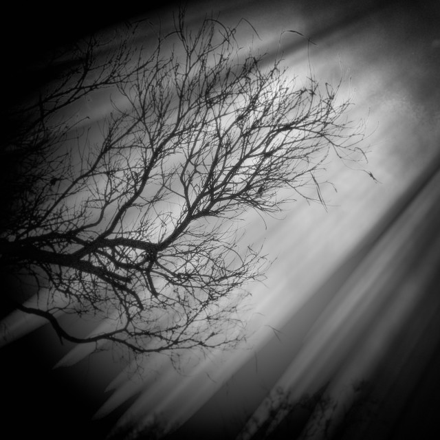 """Light Rays on Tree"" stock image"