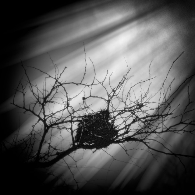 """Light Shining on Bird Nest"" stock image"