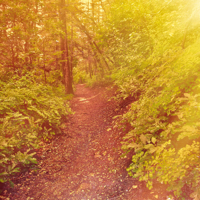 """""""Springtime Forest Trail"""" stock image"""