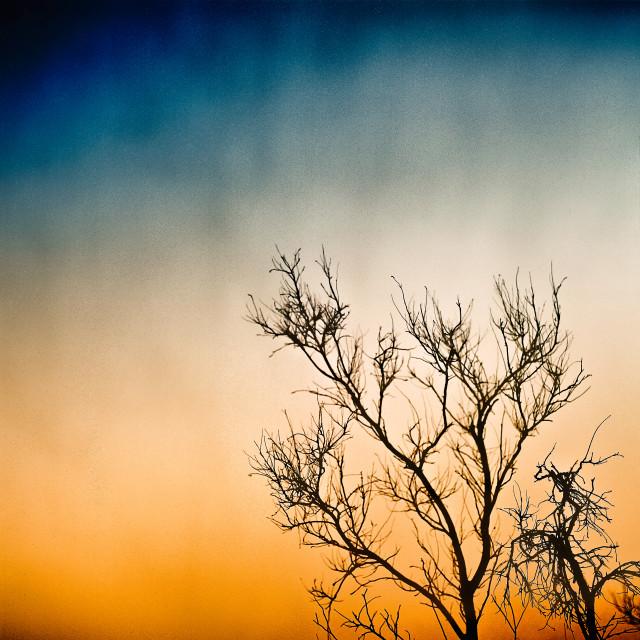 """Barren Sunrise"" stock image"