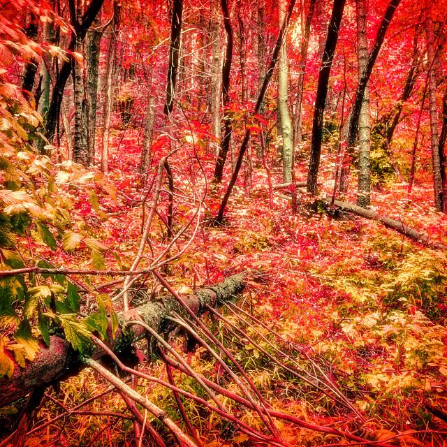 """""""Autumn Splendour"""" stock image"""