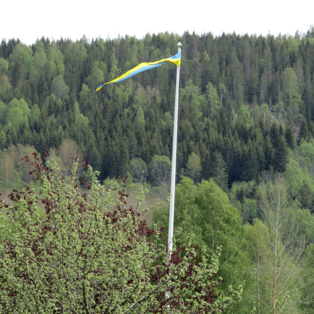 """Sweden pennant flying high within forest"" stock image"