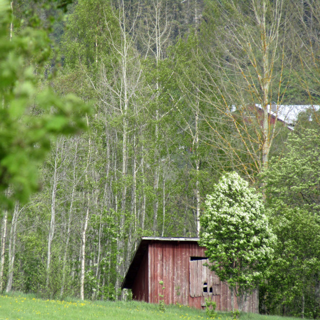 """Wooden hut in Nordingra, Sweden forest"" stock image"