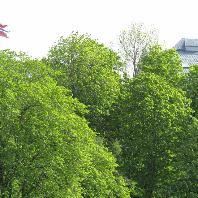 """Norway flag flying high above trees in Trondheim"" stock image"