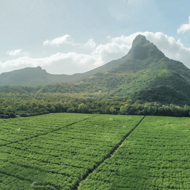 """""""Beautiful landscape of Mount Rempart in Mauritius, aerial panoramic view"""" stock image"""