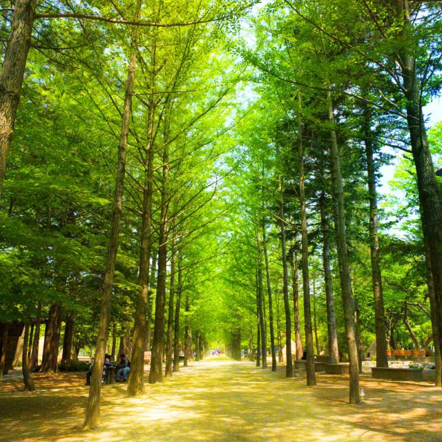 """""""Pathway through Nami"""" stock image"""