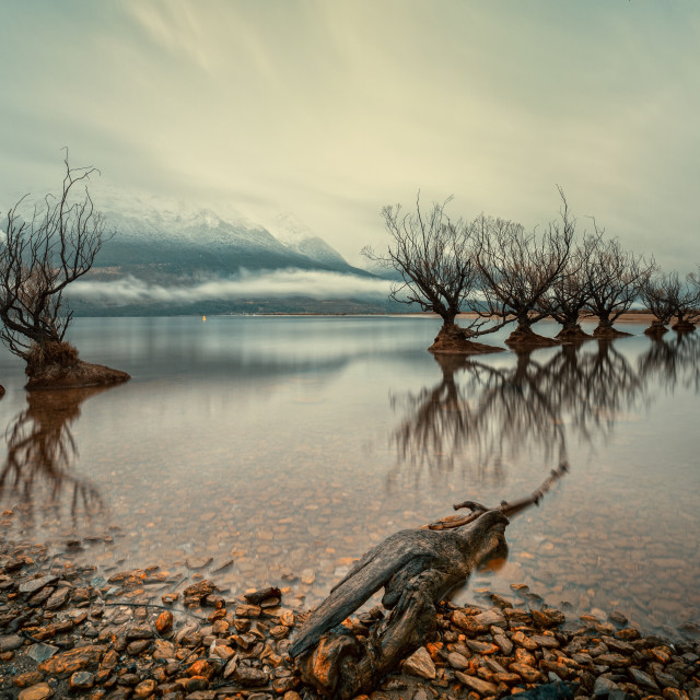 """Willows of Lake Wakatipu, Glenorchy, New Zealand"" stock image"