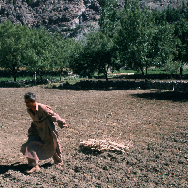 """Field labour ( Pakistan)"" stock image"