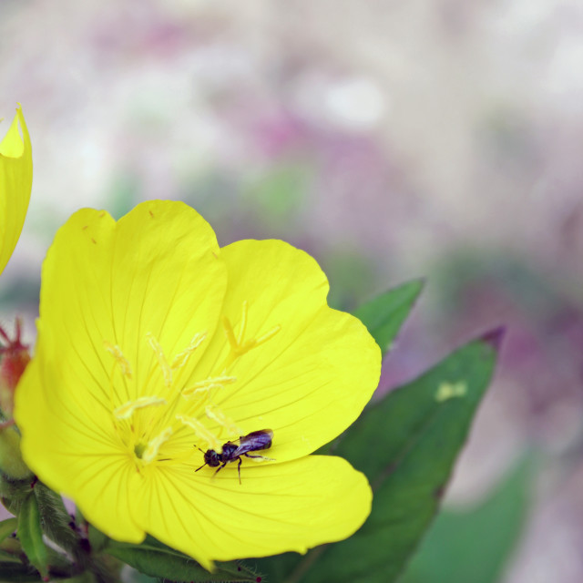 """flower and bug"" stock image"