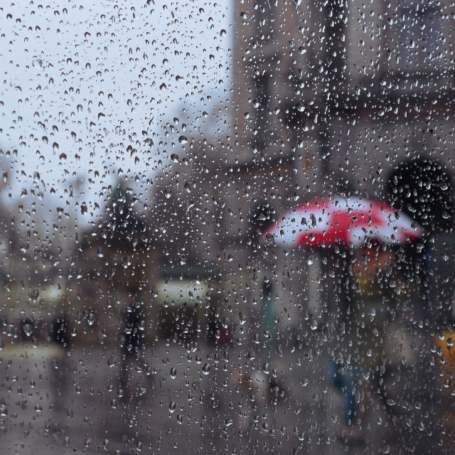 """""""Some color on a rainy day"""" stock image"""