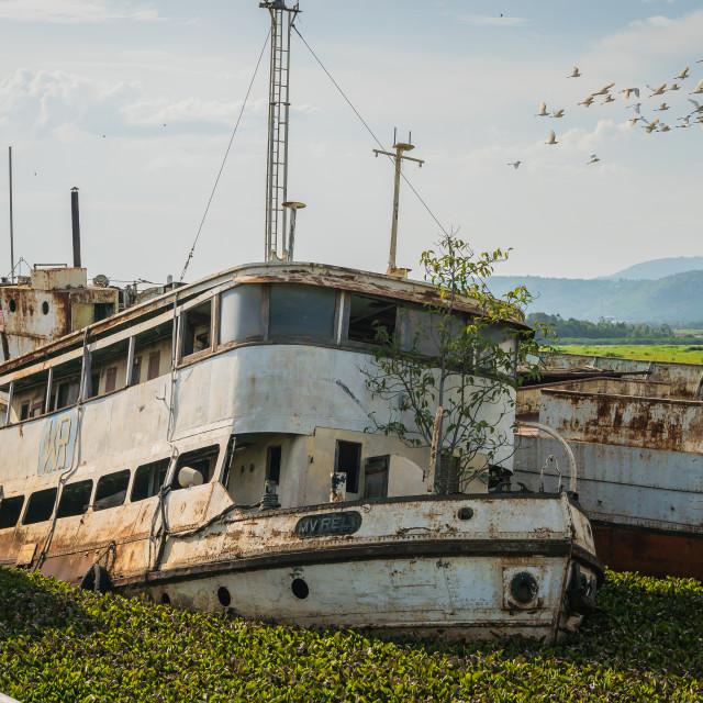 """Kisumu, Kenya - March 8, 2019 - a sunken ship in Kisumu port, which was devastated and abandoned after hyacinth blocking the navigation"" stock image"