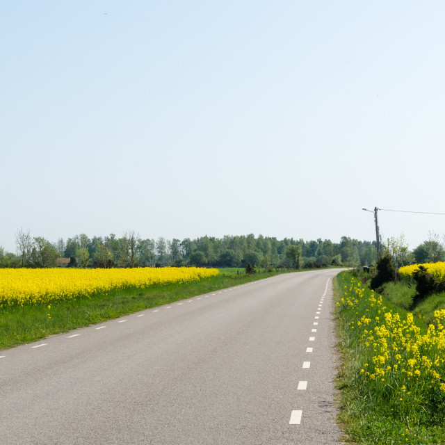 """""""Country road through blossom canola fields"""" stock image"""