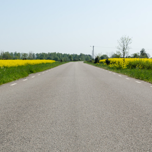 """""""Ground level view of an asphalt road with rapeseed fields by roa"""" stock image"""