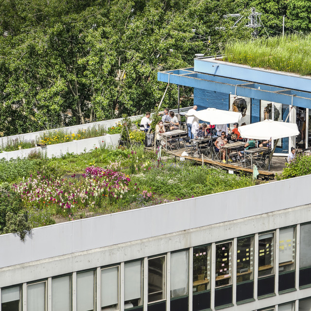 """""""Rooftop garden and cafe"""" stock image"""