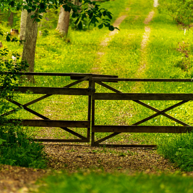 """""""Gated forest road"""" stock image"""
