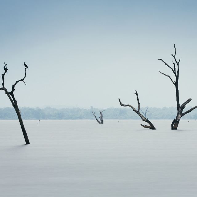 """""""Dead trees in water"""" stock image"""