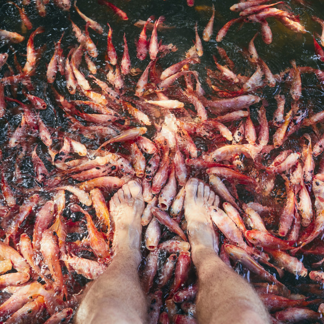 """Natural fish spa therapy and foot massage"" stock image"