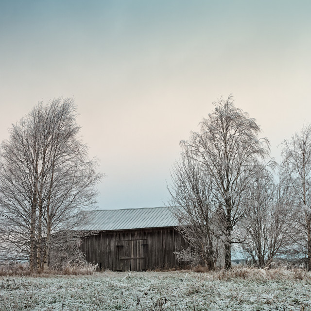"""""""Old Wooden Barn Surrounded By Trees"""" stock image"""