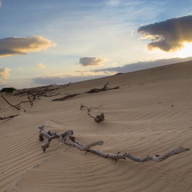 """Dunes in Boavista, Cape Verde"" stock image"