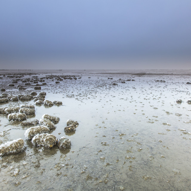 """Wierumerwad, Wadden sea"" stock image"