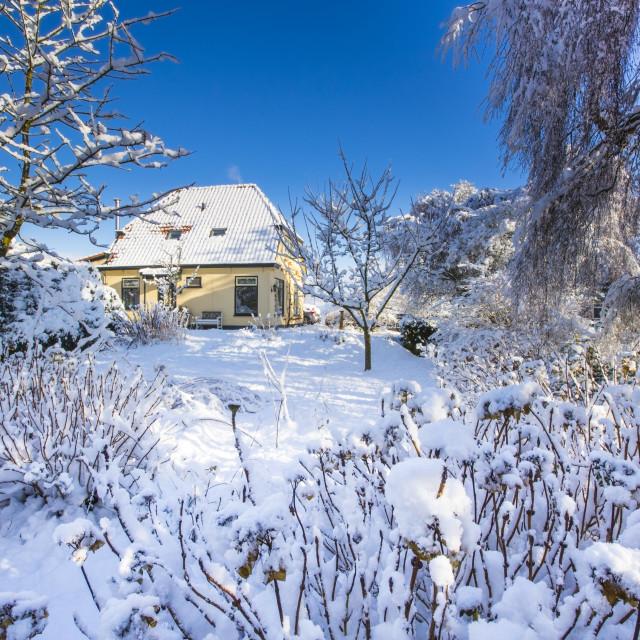 """Winter garden"" stock image"