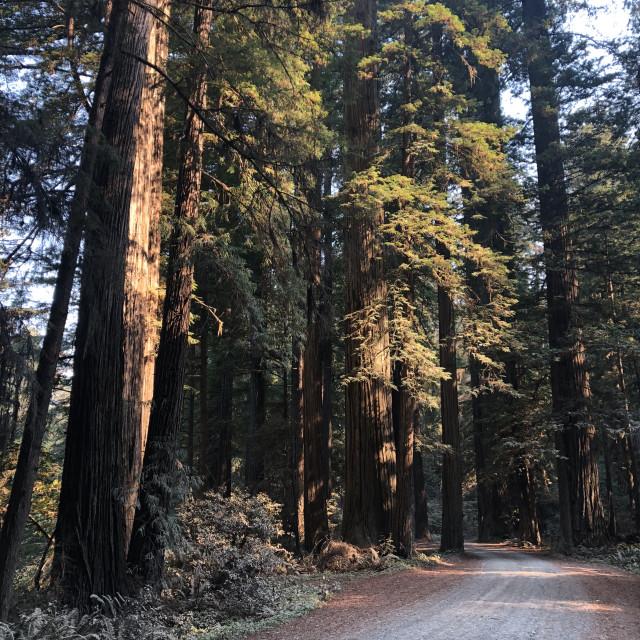 """Redwood Drive"" stock image"
