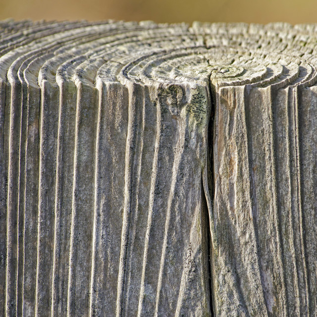 """Weathered block of wood"" stock image"
