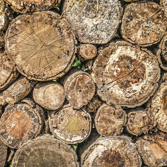 """""""Pile of tree trunks"""" stock image"""