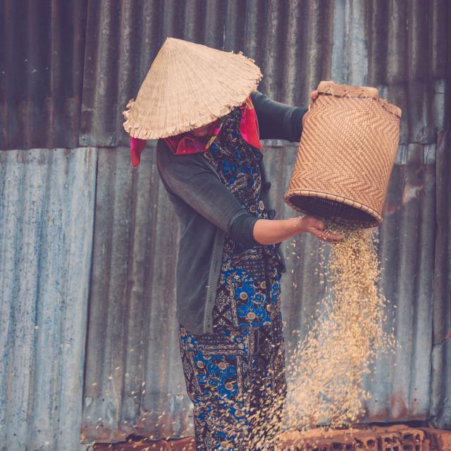 """""""A woman selling streetfood in Vietnam."""" stock image"""