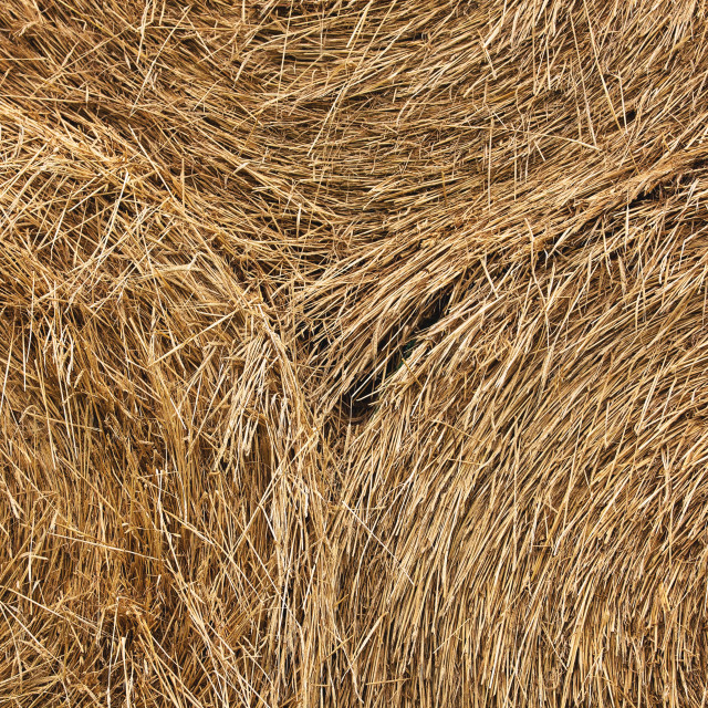 """""""Close up of three gold colored straw bales in symmetrical lines"""" stock image"""