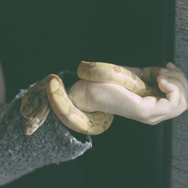 """Baby Python"" stock image"