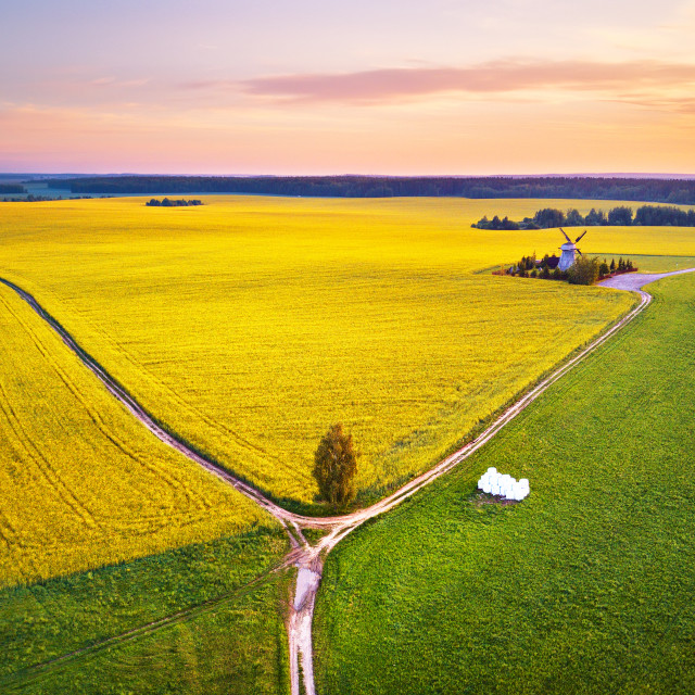 """""""Old windmill in canola Flowering Field at spring sunrise. Aerial"""" stock image"""