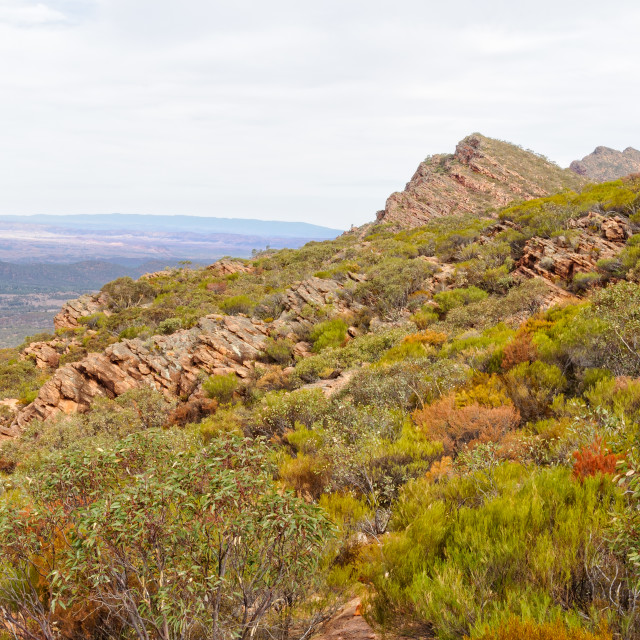"""Mount Ohlssen-Bagge trail - Wilpena Pound"" stock image"