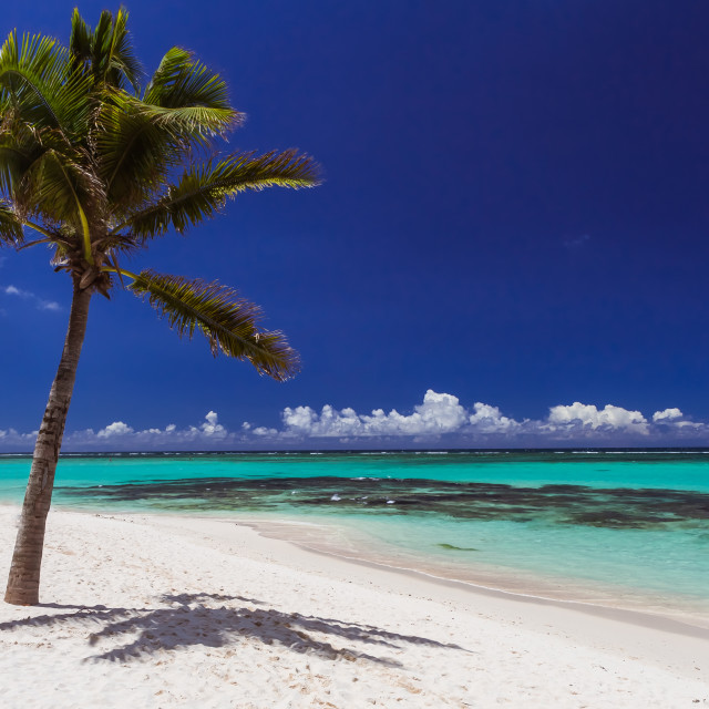 """""""palm on a white sand beach; ocean and deep blue sky, Mauritius islan in..."""" stock image"""