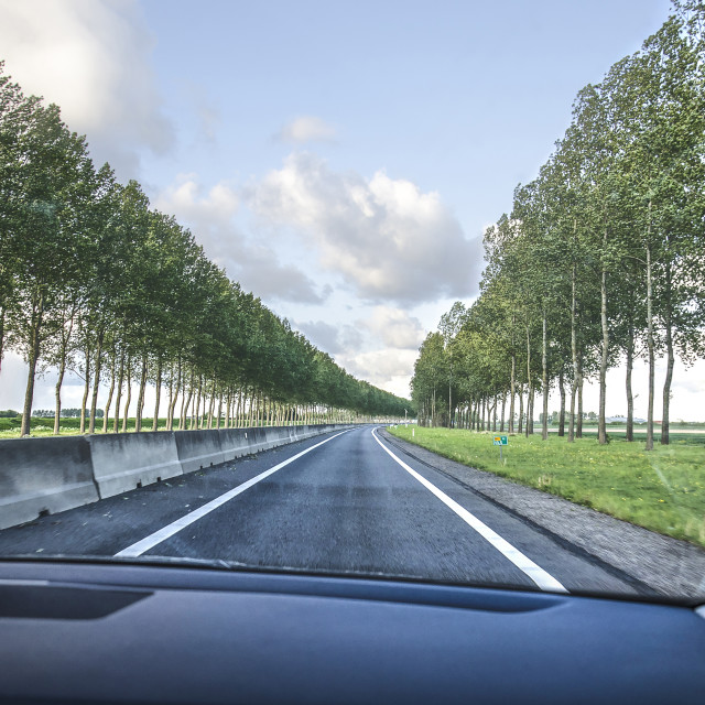 """""""Tree-lined road in the Netherlands"""" stock image"""