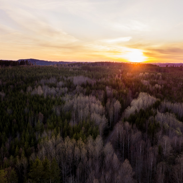 """""""Sunset above the trees"""" stock image"""