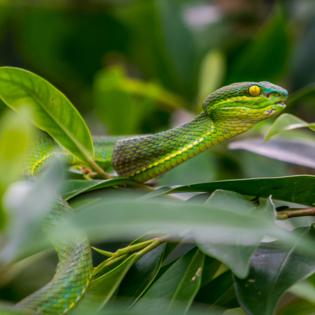 """""""snakes"""" stock image"""