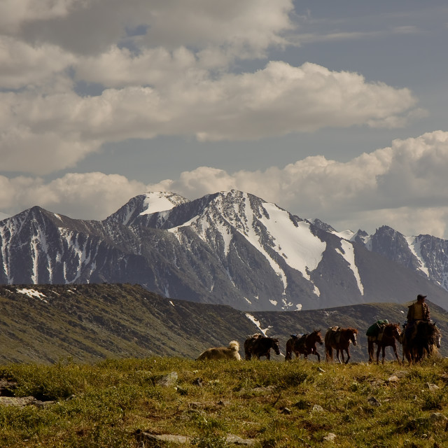 """""""Altai mountains, Russia, August 2010 - A rider on horseback with a caravan carries tourist equipment for an expedition in the mountains"""" stock image"""