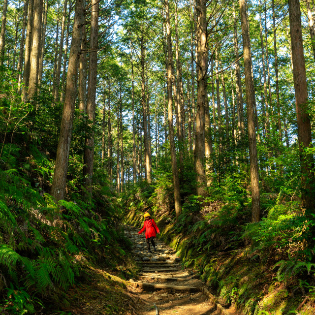 """""""Woman in red trekking in forest"""" stock image"""