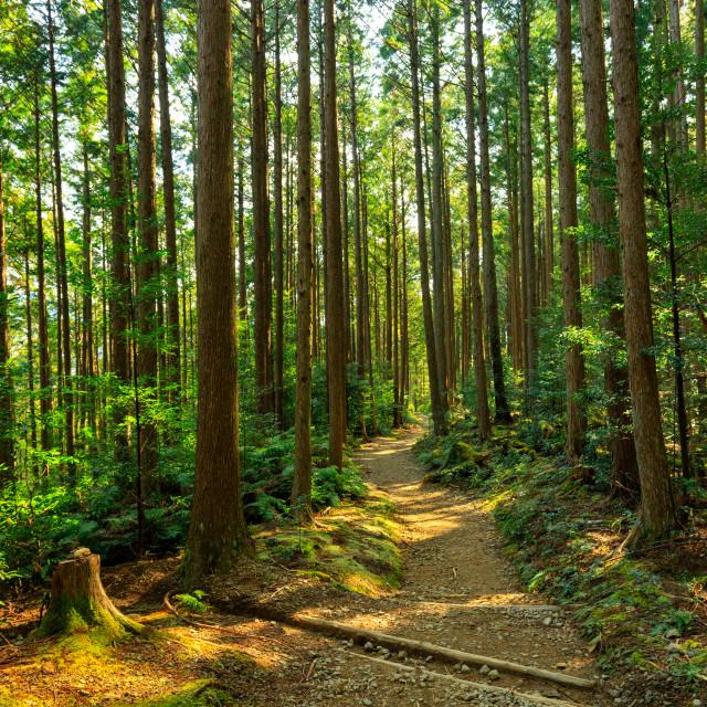 """Beautiful Japanese forest"" stock image"