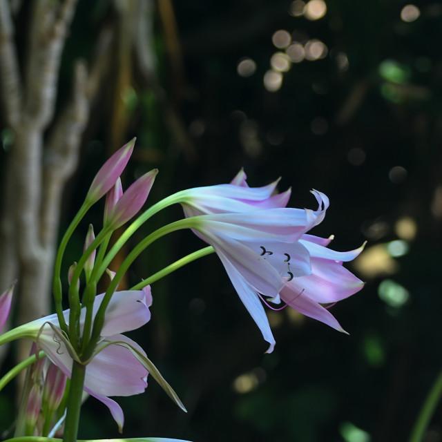 """Beautifiul flower found in Kirstenbosch National Botanical Garden"" stock image"