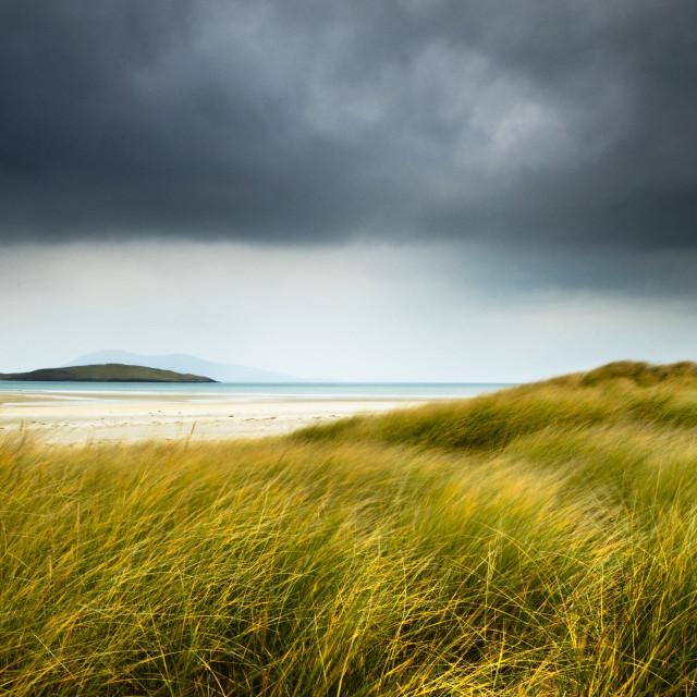 """Wind-blown grasses, Luskentyre beach"" stock image"
